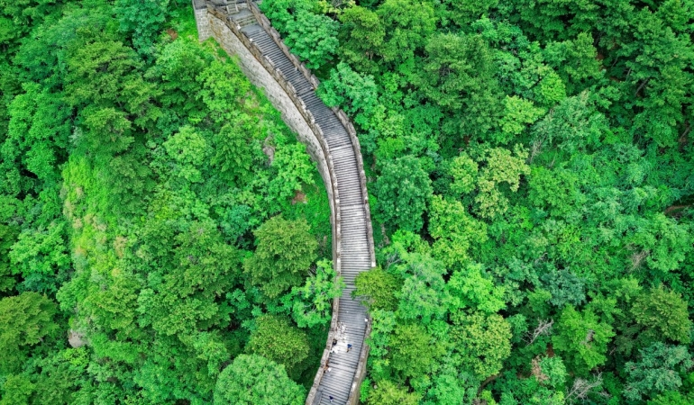 Green Leafy Lush Great Wall of China